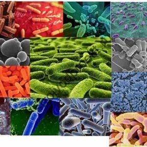 Какую функцию выполняют бактерии для септика